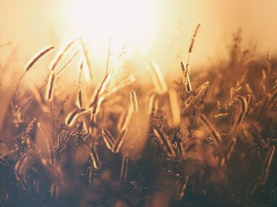 brown and black grass photo